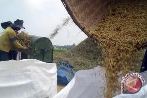 Produksi gabah petani Mukomuko turun