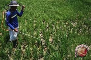 Dinas pertanian bantu petani gagal panen