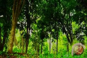 Peneliti kehutanan Bengkulu dukung pembangunan kebun raya