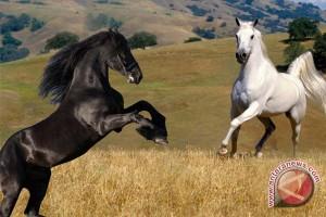 Sumbar jadi sentra peternakan kuda pacuan