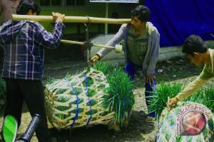 Nilai tukar petani Bengkulu turun 1,99 persen