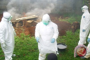 Bird flu can be anticipated with the mass extermination of chicken