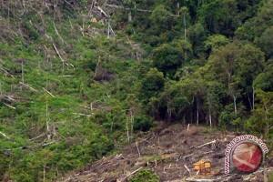 Belasan ribu hektar kawasan konservasi Bengkulu dirambah