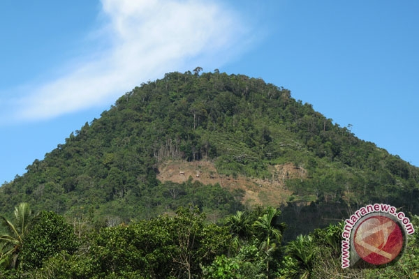 Plt gubernur tinjau kerusakan kawasan hutan