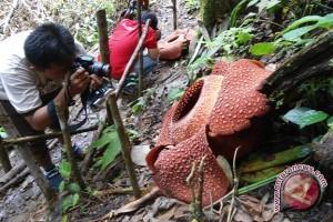 Warga temukan habitat baru Rafflesia Gadutensis