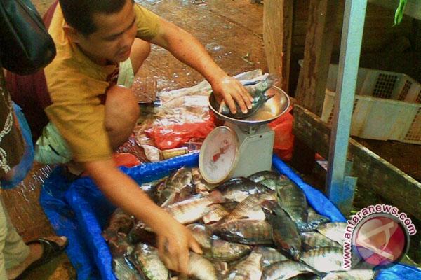 Ikan Bandeng Berpotensi Dikembangkan Di Bengkulu
