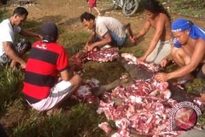 Disnakan Rejanglebong: 145 Ekor Ternak Dipotong Selama Lebaran