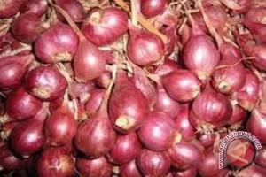 Pemkab Mukomuko tertarik kembangkan bawang merah