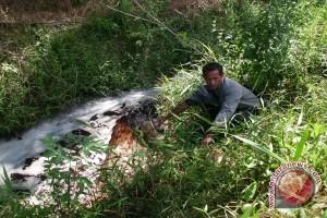 Warga Laporkan Perusahaan Buang Limbah Ke Sungai