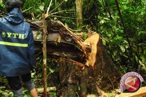 Genesis: Hak Pengusahaan Hutan Hambat Perhutanan Sosial