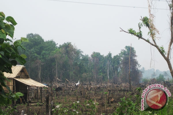 Kebakaran hutan akibat kelalaian manusia