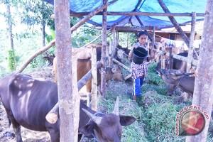 Petani Bengkulu terima bantuan sapi dan kambing
