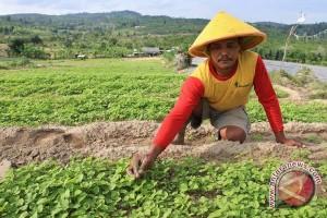 Dinas Pertanian Langkat dorong petani tanam sayuran
