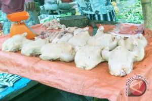 Harga Ayam Potong Di Rejanglebong Mulai Turun