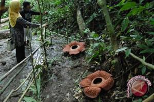 Wamen Parekraf: Bengkulu jadikan rafflesia sebagai simbol pariwisata