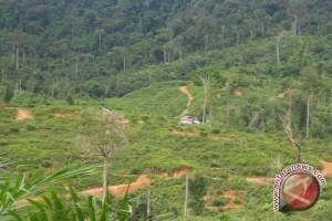 Polisi Mukomuko Tahan 10 Pelaku Perambahan Hutan