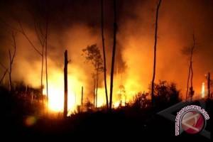 Kebakaran hutan Aceh Jaya capai 199 hektare