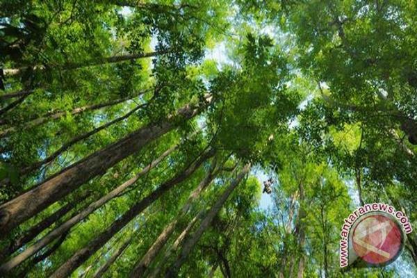 Presiden perpanjang moratorium izin tata kelola hutan
