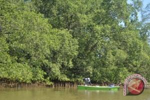 Komunitas Bengkulu olah buah mangrove jadi dodol