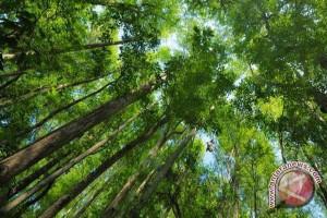 50 persen hutan konservasi di Bengkulu rusak