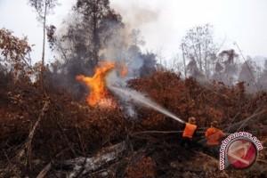 Bengkulu waspada kebakaran hutan