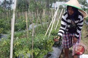 Rejang Lebong Targetkan Lima Produk Pertanian Bersertifikat
