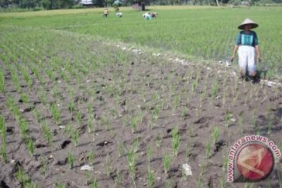 Dinas Pertanian instruksikan KP2A mengatur pendistribusian air