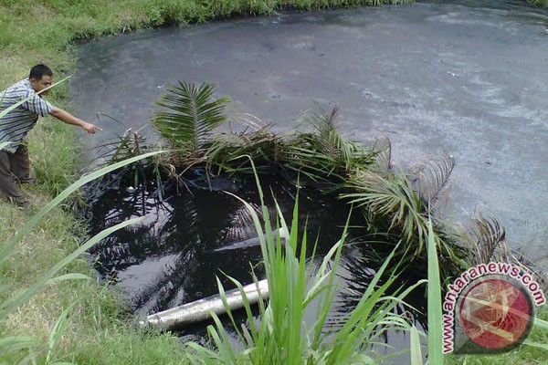 DLH Mukomuko: Limbah Pabrik CPO Cemari Lingkungan