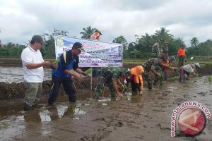 Distan: Pencetakan 500 hektare sawah libatkan tentara