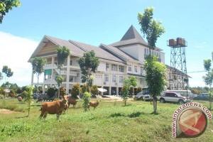 Pemkab Mukomuko Tertibkan Sapi Di Perkantoran