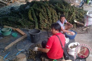Kolang-kaling Rejanglebong penuhi kebutuhan masyarakat Palembang