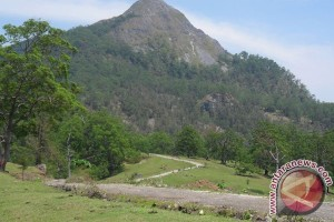 Gunung Timau menjadi pusat perhatian peneliti dunia
