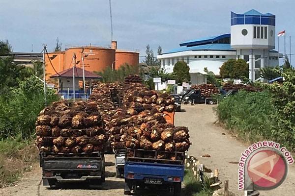 Distan pertanyakan penyebab harga sawit turun di Mukomuko