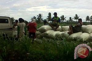 Produksi gabah Mukomuko capai 10,2 ton
