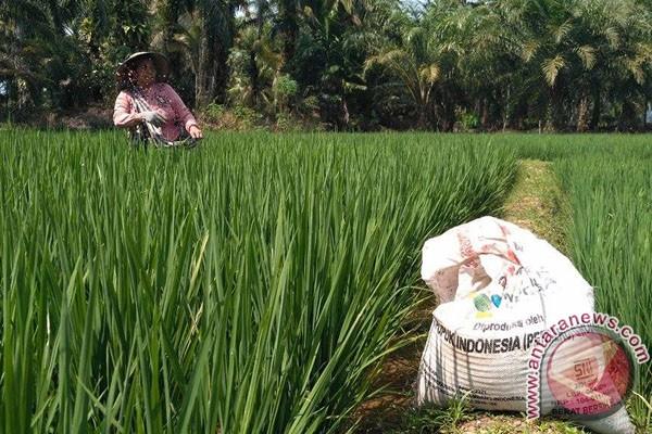 Sepuluh Hektare Sawit Petani Mukomuko Jadi Sawah