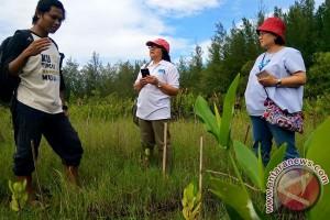 Mangrove Bengkulu Serap 3.852 Ton Karbon
