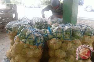 Harga Sayuran Di Rejang Lebong Turun