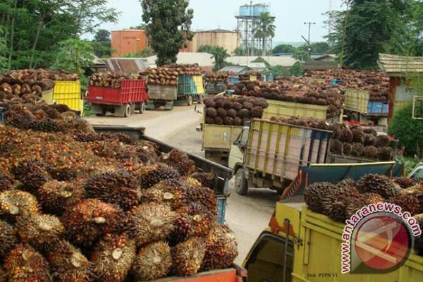 Harga sawit di pabrik Mukomuko kembali naik