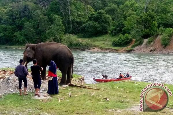 Ngabuburit Di Habitat Gajah Bengkulu
