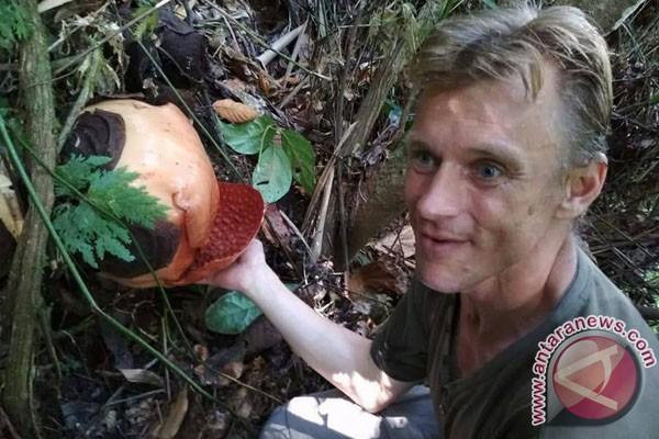 Turis Belanda Kagumi Keunikan Rafflesia Gadutensis