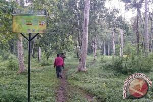 Hutan Madapi TNKS Rejang Lebong Diminati Pengunjung