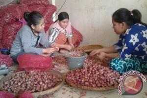 Kebutuhan Bawang Merah Pedagang Dipasok Dari Jawa