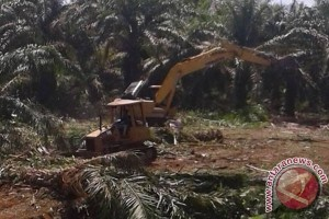 Ratusan Hektare Lahan Mukomuko Dicetak Jadi Sawah