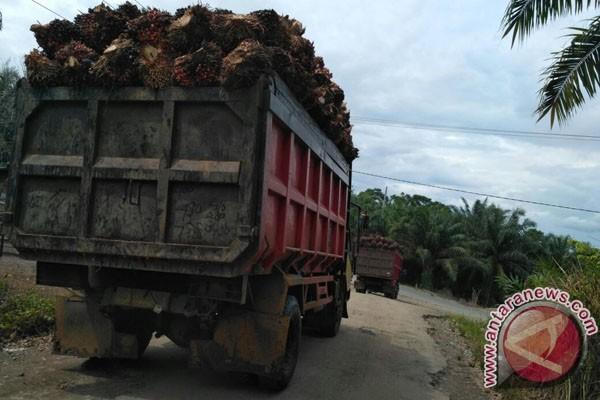 Harga sawit di pabrik Mukomuko turun lagi
