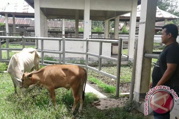 Distan Mukomuko usulkan bantuan sapi untuk lima Poktan