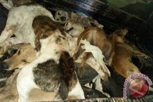 Mukomuko Memusnahkan Puluhan Anjing Liar