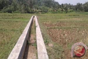Puluhan Hektare Sawah Kekeringan Di Rejang Lebong