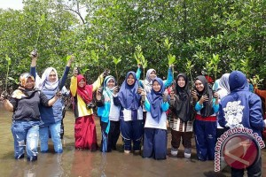 Pulau Baai Bengkulu Ditanami 300 Bibit Mangrove
