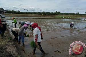 2.500 Hektare Sawah Mukomuko Dapat Bantuan Dana