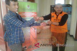 Warga serahkan seekor Kukang Sumatera ke petugas BKSDA Rejang Lebong